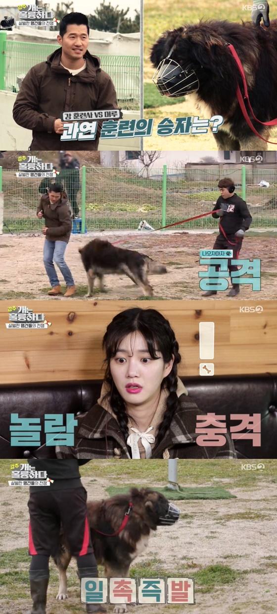 /사진=KBS 2TV 예능 '개는 훌륭하다' 방송 화면