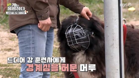 /사진= KBS 2TV 예능 '개는 훌륭하다' 방송 화면