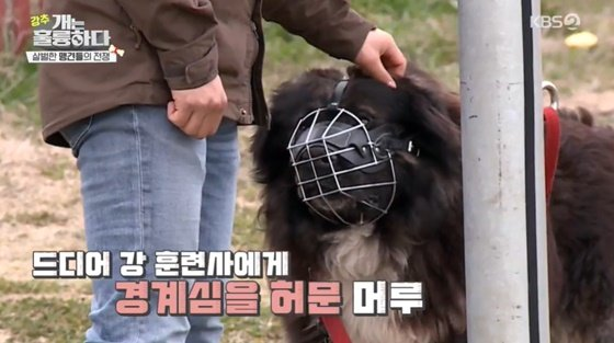 /사진= KBS 2TV 예능 \'개는 훌륭하다\' 방송 화면