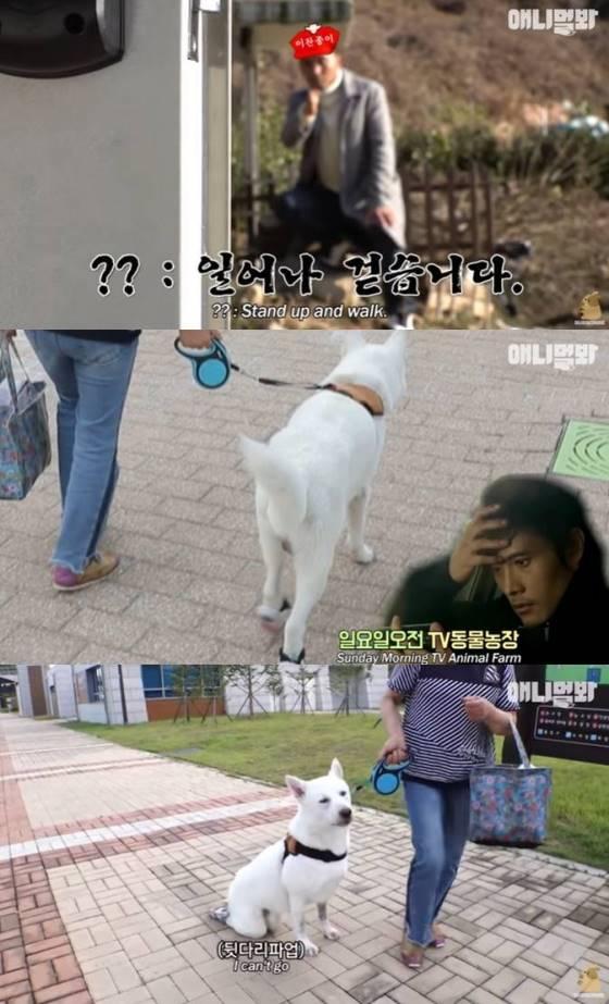 /사진=SBS